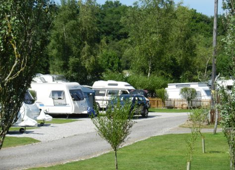 Woodland Springs trees and caravans
